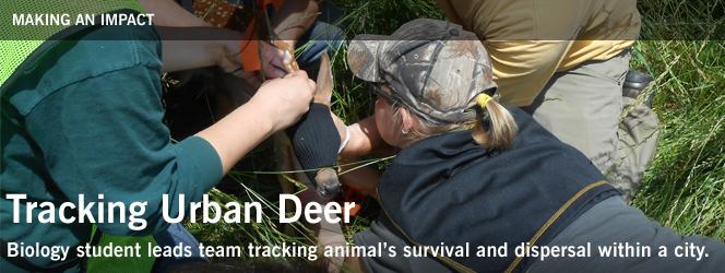 Tracking Urban Deer