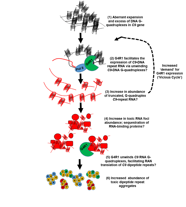 Figure illustrating RNA processes