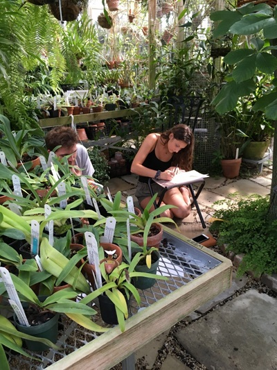 Image of artist sketching at the Rinard Orchid Greenhouse