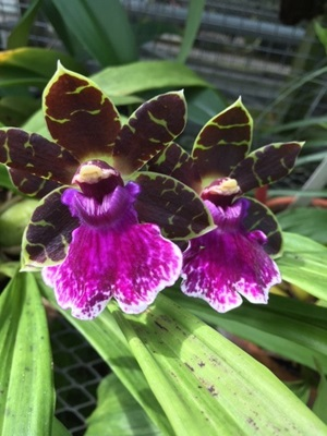 Image of orchids